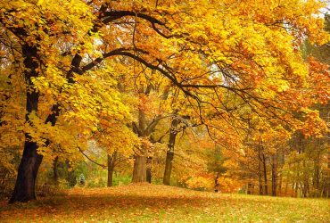 Why Autumn is Important in the Landscape
