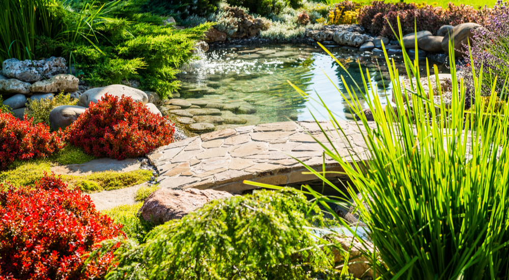 Natural pond with stones is surrounded by a landscape with tall grasses, red bushes, and other foliage.